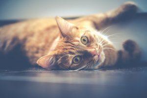 chat agé