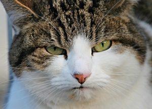 chat pense