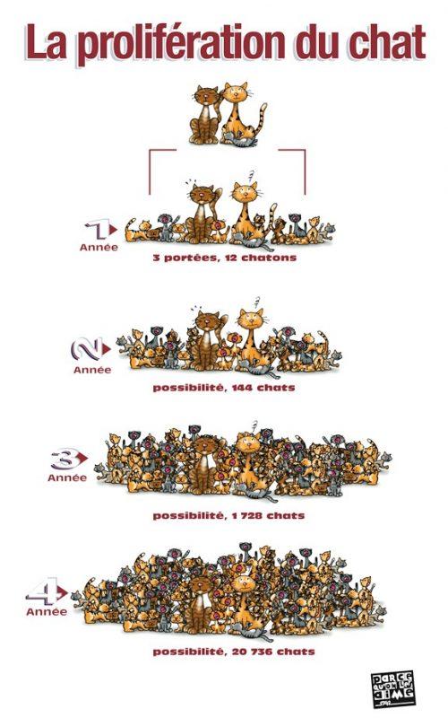 prolifération du chat