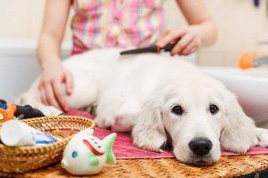 calmer votre chien