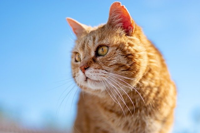 repousser chat voisin