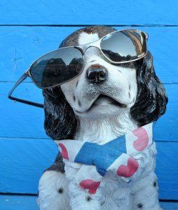 chien lunette