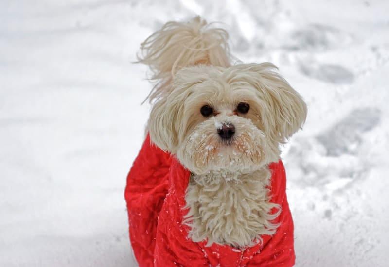 fashion pour chien