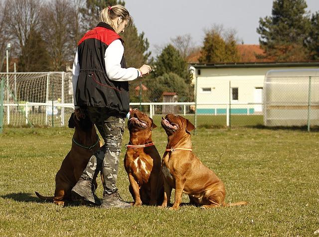 eduquer chien