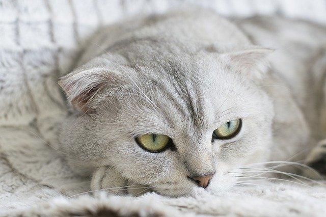 chat qui eternue