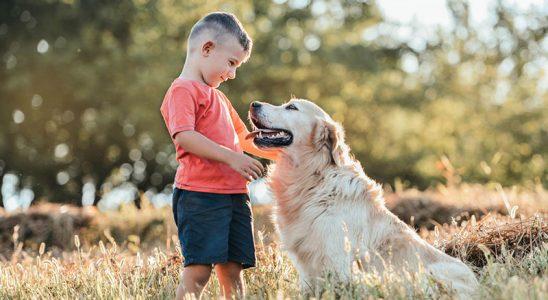 Famille avec enfant : les 5 meilleures races de chien