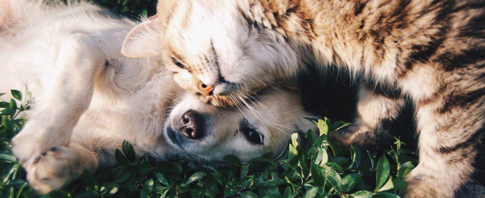 Médecine naturelle pour animaux
